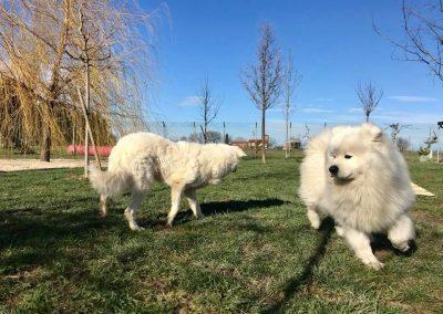Albergo per cani_Progetto Aristocani_vacanza a 4 zampe